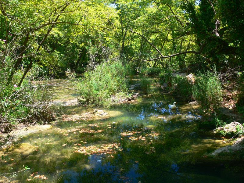 su bitkileri