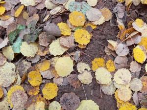 Sonbahar dökülen yapraklar