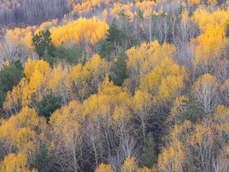 Sonbahar Ağaç