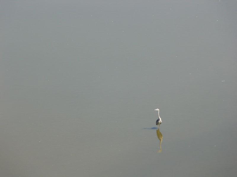 türkiyedeki kuş cennetleri