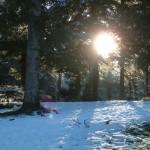 ormanda kar