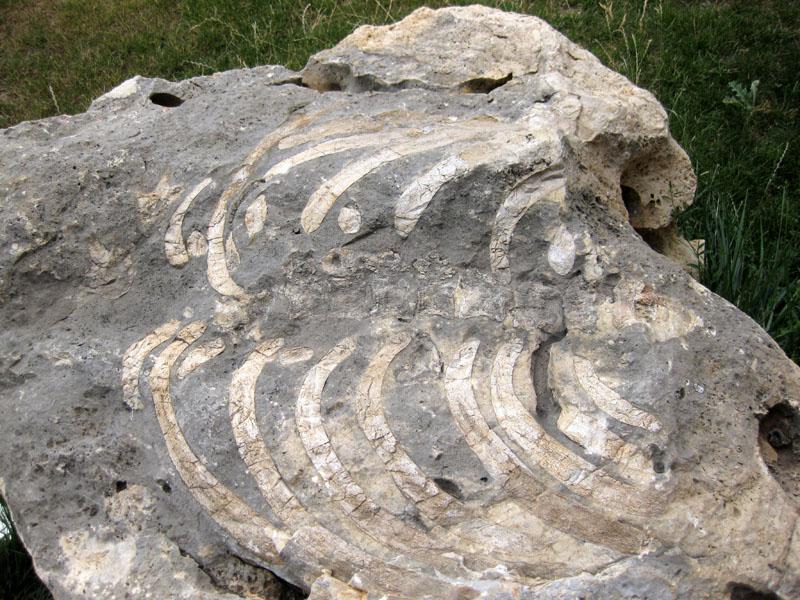 Fosil kaya