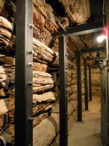 4000 yıllık ağaç gövdeleri