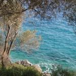 kayalıklarda zeytin ağaçları