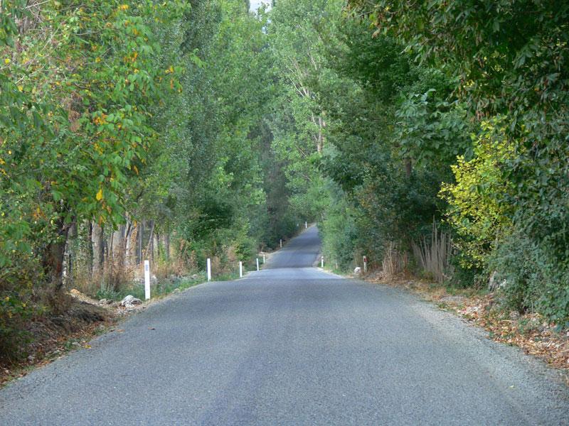 ağaçlı yol
