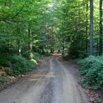 Orman yollarında..