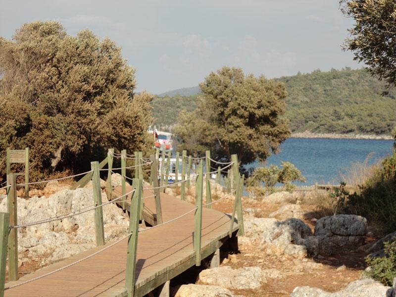 adada zeytin ağaçları