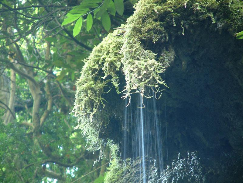 doğada suyun önemi