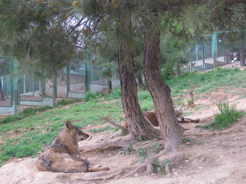 gaziantep hayvanat bahçesi