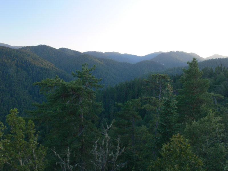 orman ağaçları