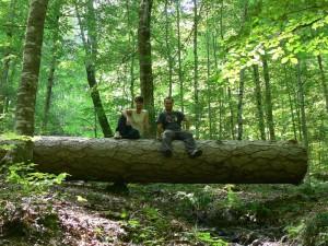 Yaşlı Ağaç Gövdesi