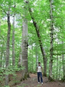 ilginç ağaç