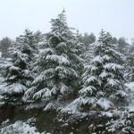Eymir Gölü Ağaçlar