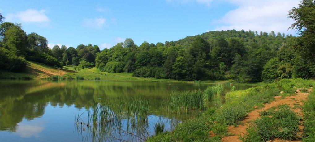 Göktepe Göleti – Yenice Ormanları