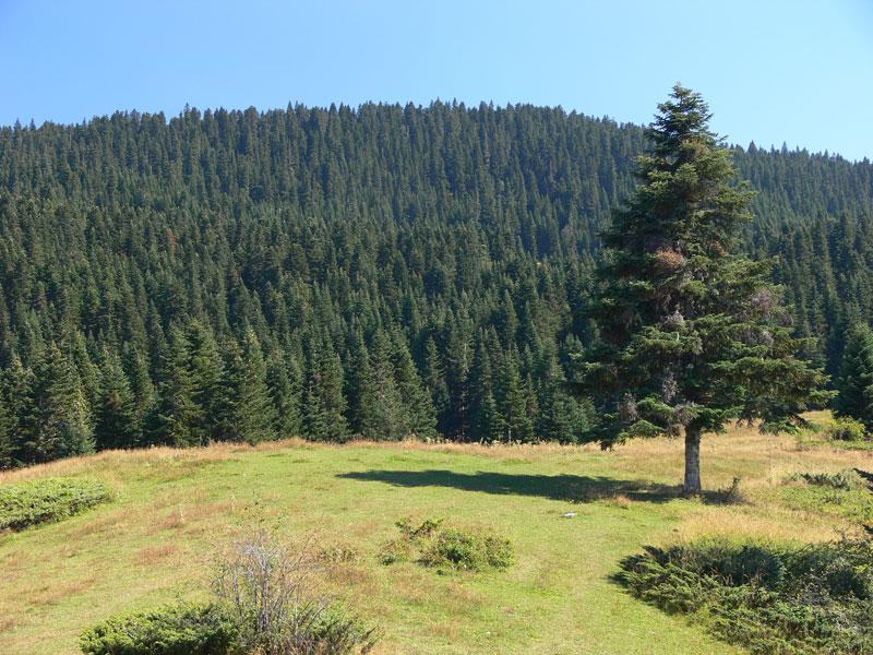 Ilgaz Dağı Milli Parkı Yürüyüşü