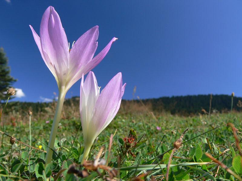 Ilgaz Dağı Milli Parkında Çiçekler