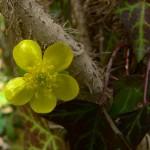 Ormanda İlkbahar