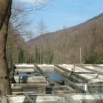 Alabalık Üretim Havuzları