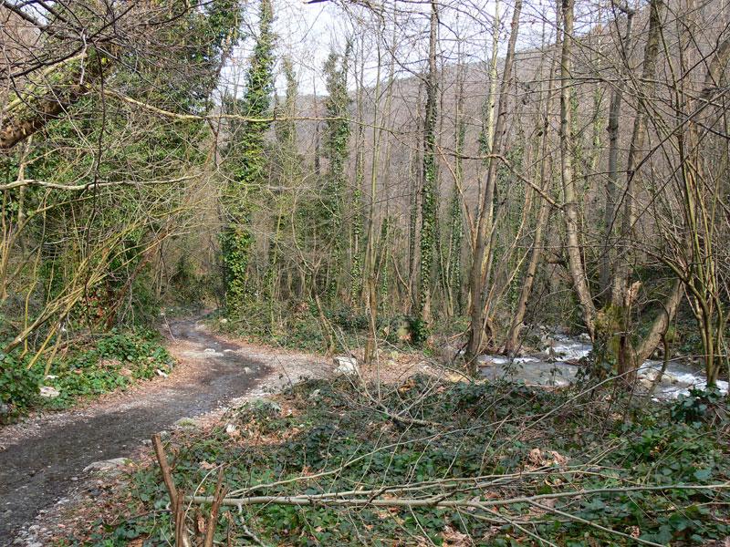 Mahmudiye Ormanları