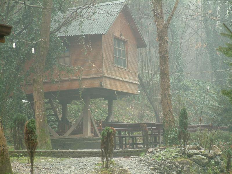 ormanda kulübe