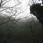 Yağmurda orman