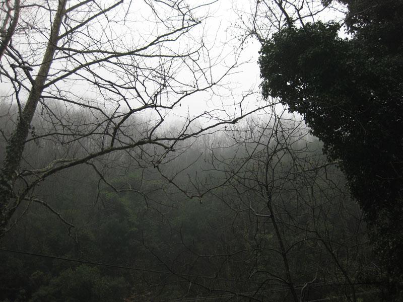 Maşukiye ormanları