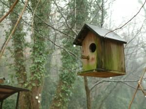 ormanda kuş yuvası