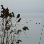 Sapanca Gölü'nde kuşlar