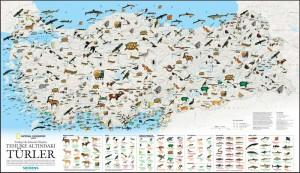 National Geographic Tehlike Altındaki Türler Haritası - Tehlike Altında Olan Türler