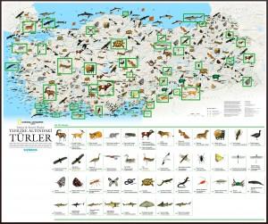 National Geographic Tehlikedeki Türler Haritası Büyük Boy