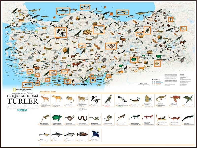 National Geographic Tehlike Altındaki Türler Haritası - Tehlike Altında Olan Türler (National Geographic)
