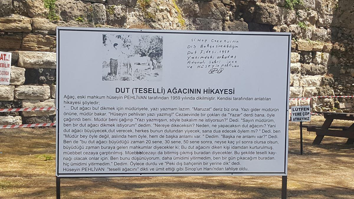 Dut (Teselli) Ağacının Hikayesi