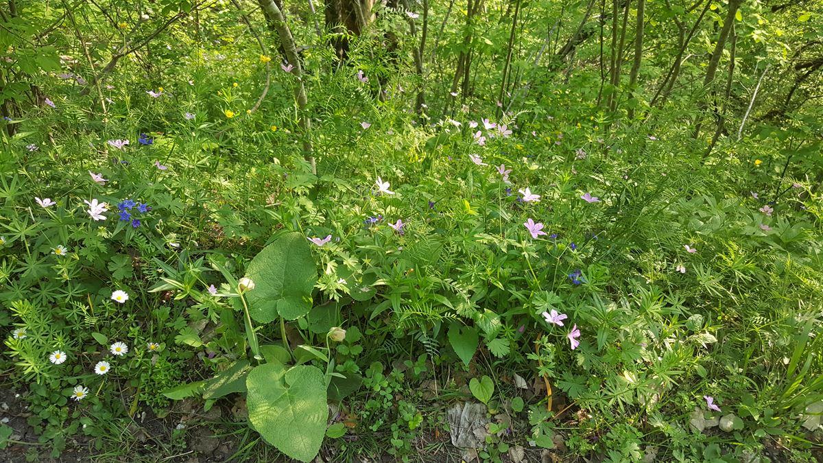 Efelek Şelalesi Çiçekleri