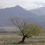 Sultan Sazlığı Civarında Erciyes Manzarası