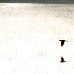 Sultan Sazlığı Kuş Cenneti