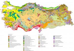 Türkiye Bitki Örtüsü Haritası Büyük Boy