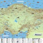 Türkiye'nin Tatlı Su ve Deniz Balıkları Haritası