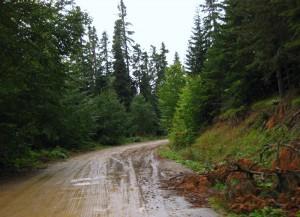 Yedigöller Yolu- Yedigöller Yağmur Çamur