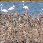 izmir-kus-cenneti-flamingo-yolu-gibi-53eb36badb6d6