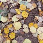 Karagöl Sonbahar Yaprakları