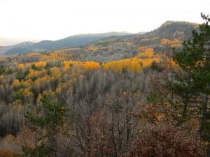 Karagöl Sonbahar Ağaçları