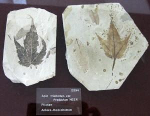 Bitki Fosili