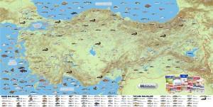 Türkiye Tatlı Su ve Deniz Balıkları Haritası Büyük Boy