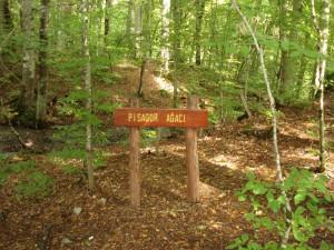 Pisagor Ağacı - Yedigöller Pisagor Ağacı