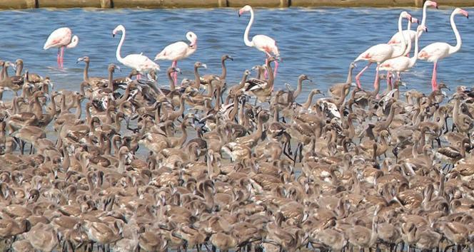 İzmir Kuş Cenneti 'flamingo' yolu gibi